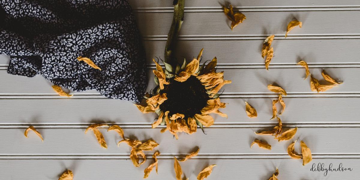 dying.sunflower.blog